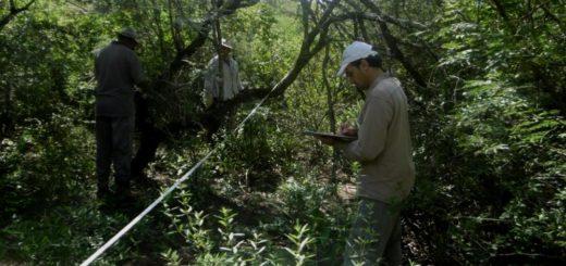 IUFRO en Posadas: expertos presentarán un esquema de pagos por servicios ecosistémicos como herramienta de conservación de los bosques nativos