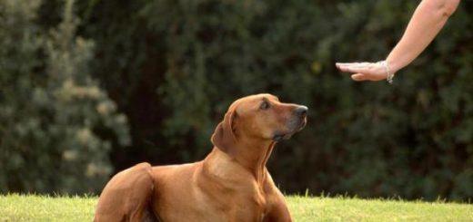 La ciencia indica que las personas y las mascotas son más felices con un buen baño de sol