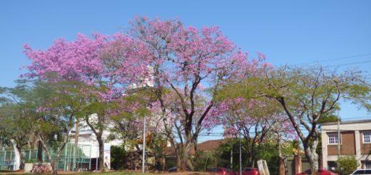 Miércoles soleado y caluroso con máximas de 34 grados en Misiones