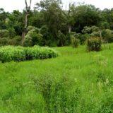 Jornadas de transferencias tecnológicas sobre agua y forestación se realizarán en Virasoro