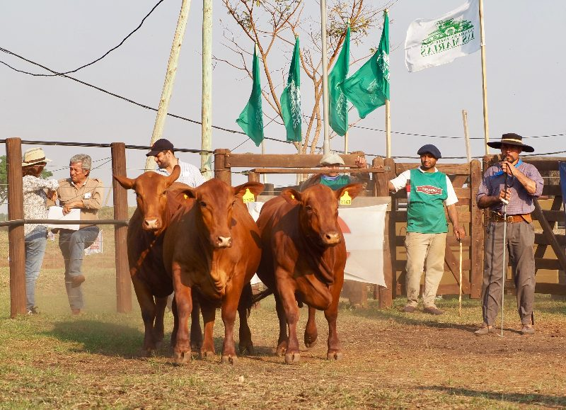 La Expo Rural de Virasoro pone a venta genética, invernada y cría el 7 de septiembre