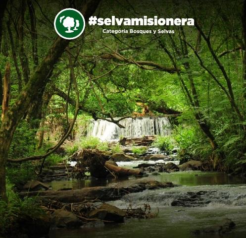 Selva Misionera y Saltos del Moconá, finalistas del concurso de las 7 Maravillas Naturales Argentinas