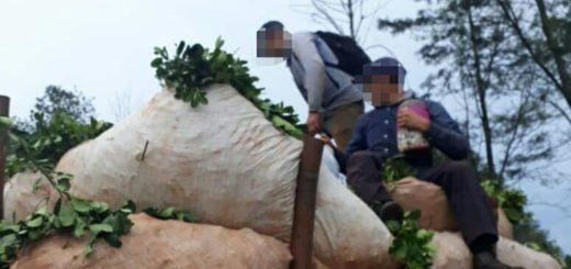Oberá: retienen a un camión cargado con yerba, que llevaba siete tareferos sobre las ponchadas