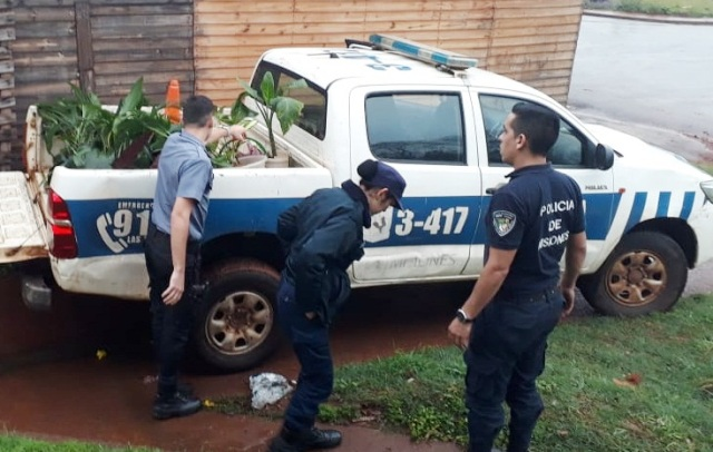 Recuperaron plantas robadas a una vecina de la CH 147 de Posadas