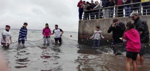 Recursos naturales: liberaron unos 300 juveniles de bogaenelríoParaná