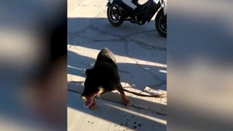 Maltrato animal: un hombre ató a su perro a la moto y lo arrastró durante varias cuadras