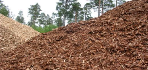 Bioenergía: la biomasa será la renovable que más crecerá hasta 2023, según la Agencia Internacional de Energía