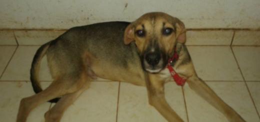Caso de los 27 perros abandonados en Posadas: necesitan con urgencia tránsito o adopción ya que deben entregar la casa