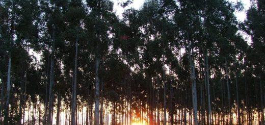 El sector asegurador y el forestal aliados estratégicos para mitigar los efectos globales del Cambio Climático