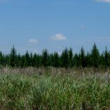 Seguro Verde: ya estaría en marcha el mecanismo de pago para destinar fondos a la deuda de planes forestales de la Ley 25.080