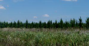 """Incentivo forestal: En lo que va del año, Nación ejecutó más de 87 millones de pesos para el pago de planes y se estima que del """"Seguro Verde"""" destinen 94 millones al sector en el último trimestre"""