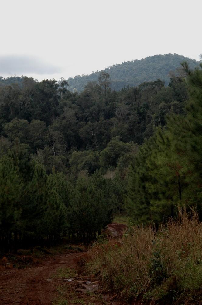 Entre Corrientes y Misiones se estima una deuda pendiente de pago de planes forestales por 385 millones de pesos