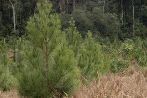 Seguro Verde: Resolución de la Superintendencia de Seguros de la Nación y Ministerio de Agroindustria