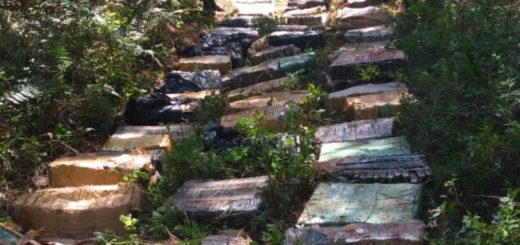 Encontraron más de dos toneladas y media de marihuana ocultos en plantaciones de Caraguatay