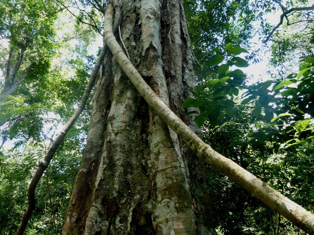 Responsabilidad ambiental, un llamado a la acción en el Día Mundial de la Protección de la Naturaleza