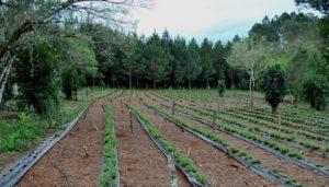 Comunidad integrada: stevia, yerba mate y forestación como alternativa sostenible de productores y comunidades indígenas en El Soberbio