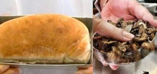 En Brasil crearon un pan hecho a base de cucaracha, afirman que es una solución para la escasez mundial de proteína