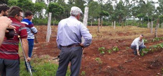En Gobernador López apuestan a la producción de jengibre