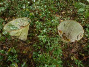 Áreas o árboles semilleros de especies nativas podrán ser registrados para su propagación, según resolución del INASE
