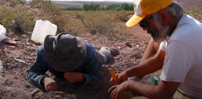 Neuquén: hallaron restos de una nueva especie de dinosaurio saurópodo
