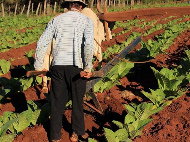 El Congreso aprobó la Ley de Monotributo que beneficia a pequeños productores agrícolas