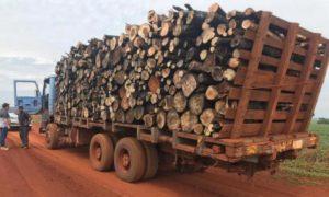 Paraguay: incautan camiones con madera de desmonte ilegal en zona de Salto del Guairá
