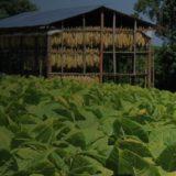 Destacan el impacto económico de los fondos que llegan para el sector tabacalero
