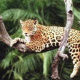 Conservación: Andresito y Montecarlo ya tienen chacras demostrativas para evitar ataques de yaguaretés al ganado