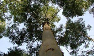 ForestAr 2030: gobierno nacional abrió nuevo espacio para el diseño de un plan estratégico para el sector foresto-industrial
