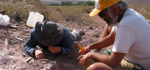 Hallan en Neuquén una nueva especie de dinosaurio de 120 millones de años de antigüedad