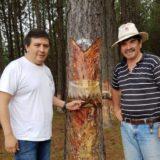INTA e INTI evalúan la resistencia en postes de pino impregnado para tendido urbano y rural