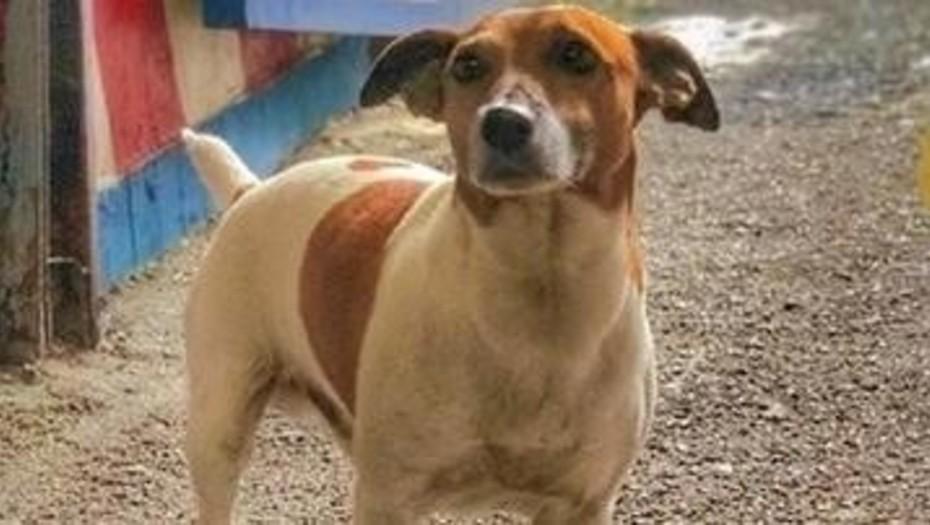 En Italia: Un perro detectó 10 kilos de cocaína y ahora la mafia quiere matarlo