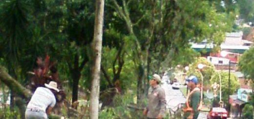Leandro N. Alem: el equipo municipal está sacando los arboles y poniendo en condiciones la circulación en las calles
