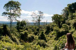 Reserva Natural Guaraní, un semillero de experiencia en investigación en biodiversidad y manejo de bosque nativo