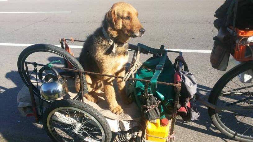 Inseparables: Un hombre cruzó el país en bicicleta junto a su perro
