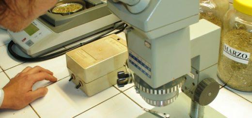 Es norma: la yerba mate elaborada debe contar con análisis microbiológicos