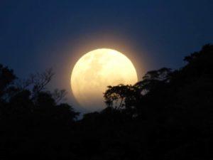 No te pierdas este fin de semana el atardecer de luna llena sobre la selva misionera, a orillas del Río Uruguay