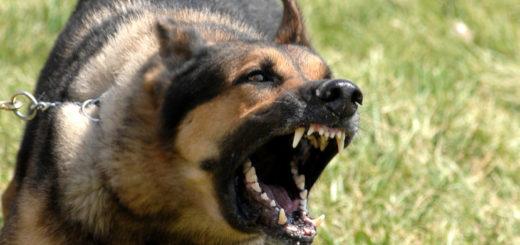 Un hombre fue atacado por su propio perro porque le estaba pegando a su mujer