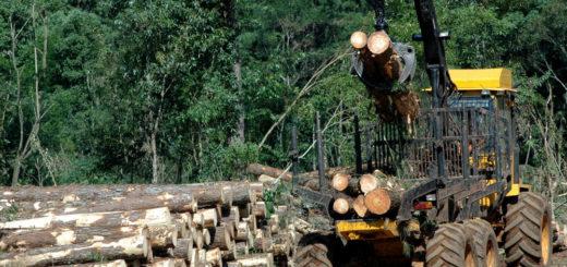 Un informe del IERAL revela que Misiones dejó de exportar algunos derivados de la forestoindustria