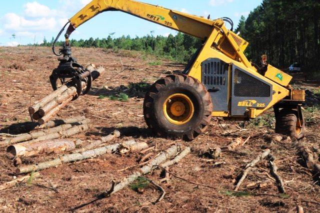Agroindustria lanza un nuevo visualizador de extracciones forestales