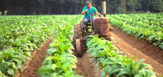 Garay confirmó el pago a los tabacaleros y aseguró que están gestionando con Nación el pago de la caja verde