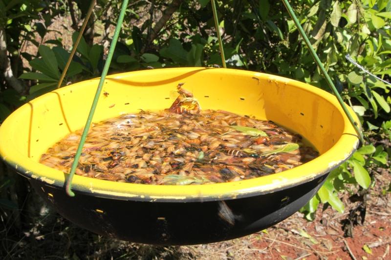 El INYM evalúa el funcionamiento de una trampa con energía solar para el control natural del rulo de la yerba mate