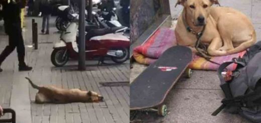 España: Un centenar de personas se movilizaron para pedir justicia por el perro que murió por el disparo de un policía
