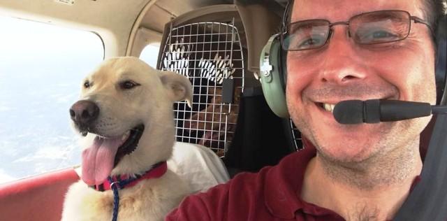 Un piloto compró un avión para salvarle la vida a miles de perros condenados a muerte