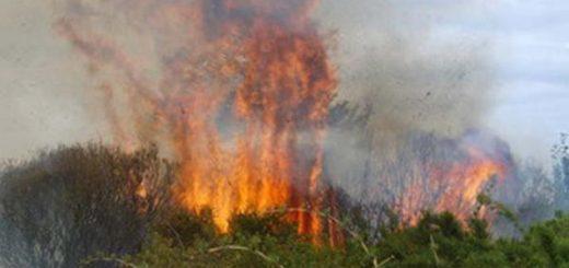 Advierten que es alto el índice de peligrosidad de incendios en Misiones