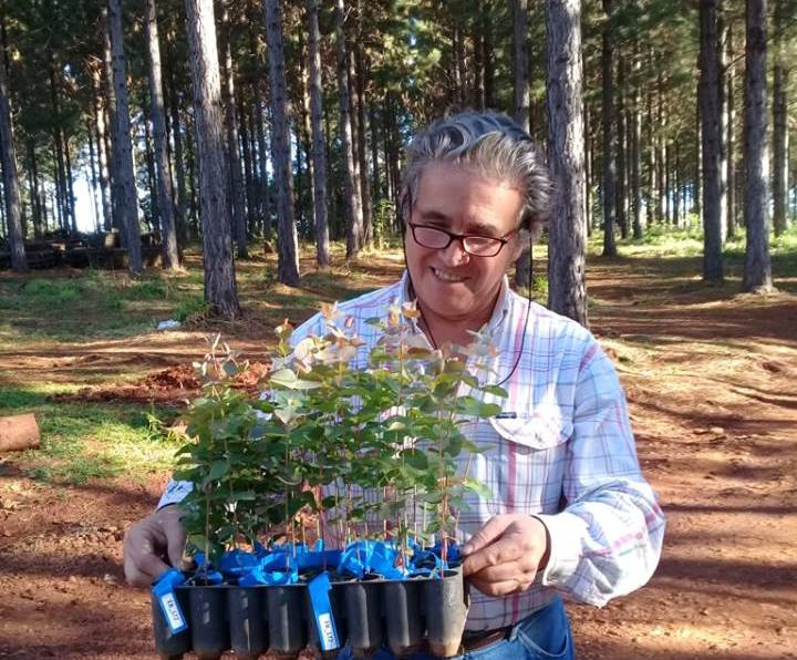 """AFOME: """"Es un paso necesario la prórroga de la Ley 25.080, pero lo importante es que se pague el incentivo forestal a los productores"""""""