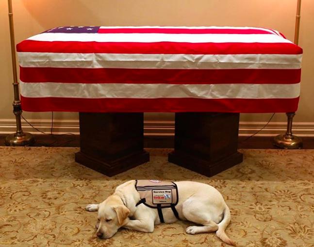 La imagen del perro del ex presidente George H.W. Bush resguardando su ataúd que recorre el mundo