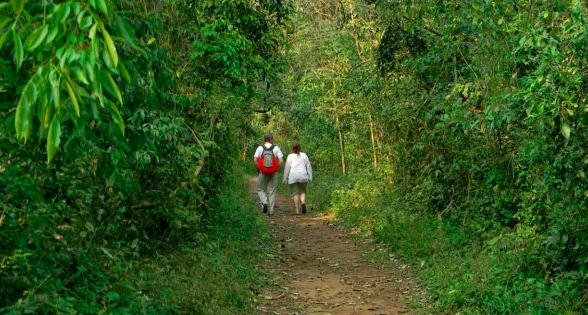 ¿Por qué la selva misionera tiene que ser una de las 7 Maravillas Naturales Argentinas?