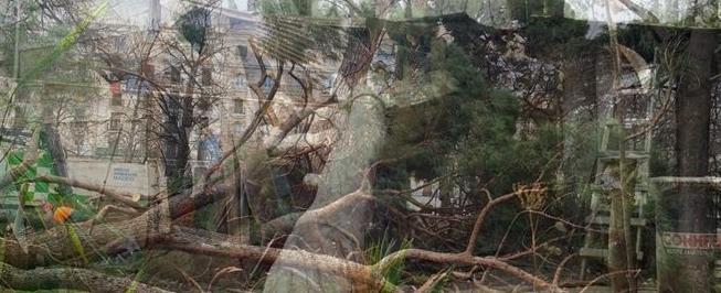 La Plata: un árbol cayó arriba de una casa y murieron dos personas