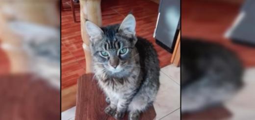 Un YouTuber chileno se filmó mientras golpeaba a su gato hasta matarlo, ahora es repudiado en las redes